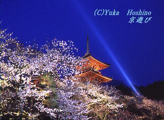 清水寺の桜 ライ...